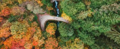 Autunno e foliage
