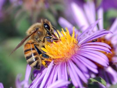 BIODIVERSE FRIDAYS: the fantastic world of Rina the bee