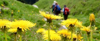 Wandelen en trekking rond het Ledromeer