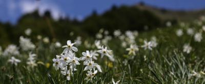 Spring at Lake Ledro