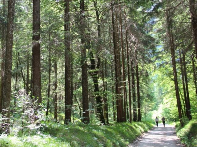 HIKING PROGRAM - THROUGH THE WOOD OF VAL CONCEI